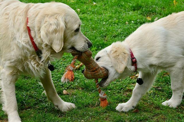 sachkundenachweis hund nrw online
